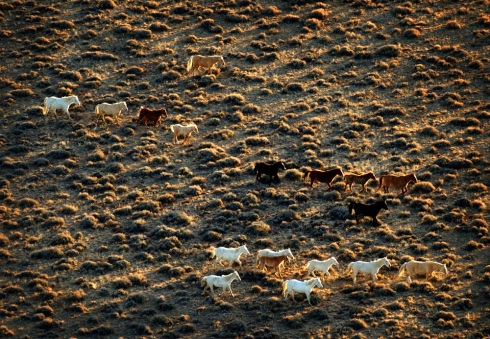 A herd of wild horses appear like a real-life depiction of a cave painting in the Red Desert's Jack Morrow Hills, Monday, Nov. 17, 2008. The desert is home to thousand of wild horses, an iconic symbol of the West. (Photo/Morgan E. Heim)