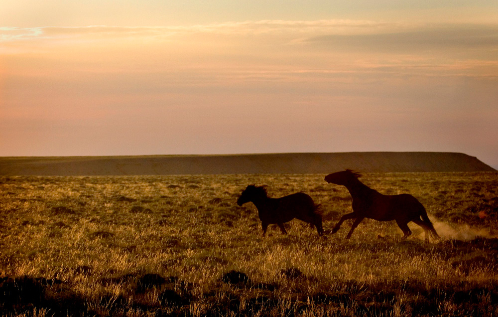 The Wild Horses Of Desert Dust Notes From The Big Empty